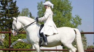 Lipizzaner & Friends